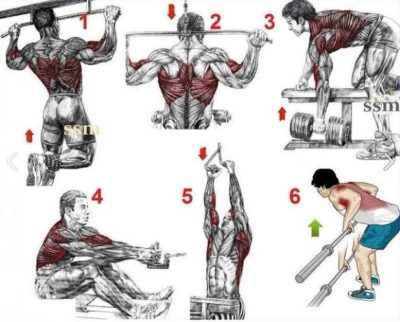 A Look At Different Types Of Back Workouts