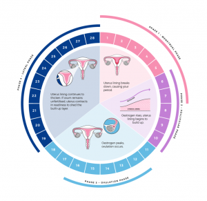 Performance of the menstrual cycle or bleeding disorders
