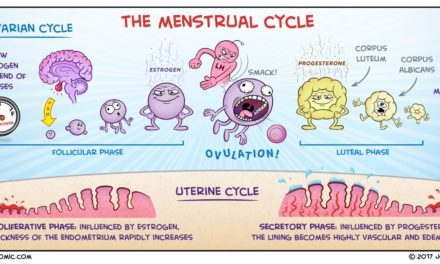 What is Menstrual Cycle and Ovarian Cycle?