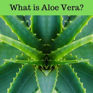 What is Aloe Vera?