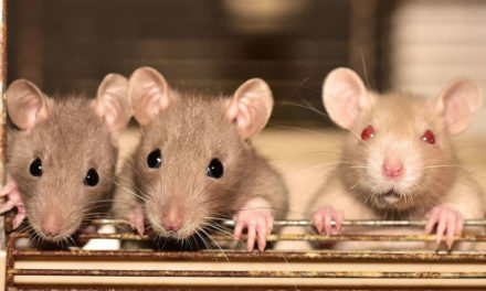 What is Hantavirus Infection?