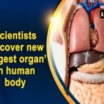 The Largest Organ in Human Body