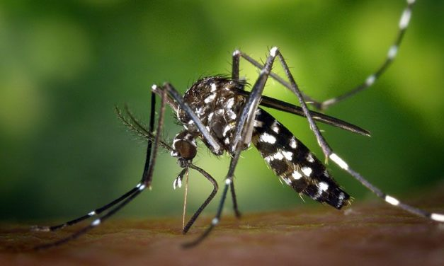 Which Mosquito Killer Should You Use?