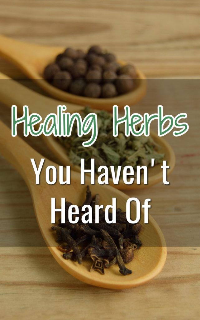 12 Essential Herbs from Encyclopedia of Herbal Medicine