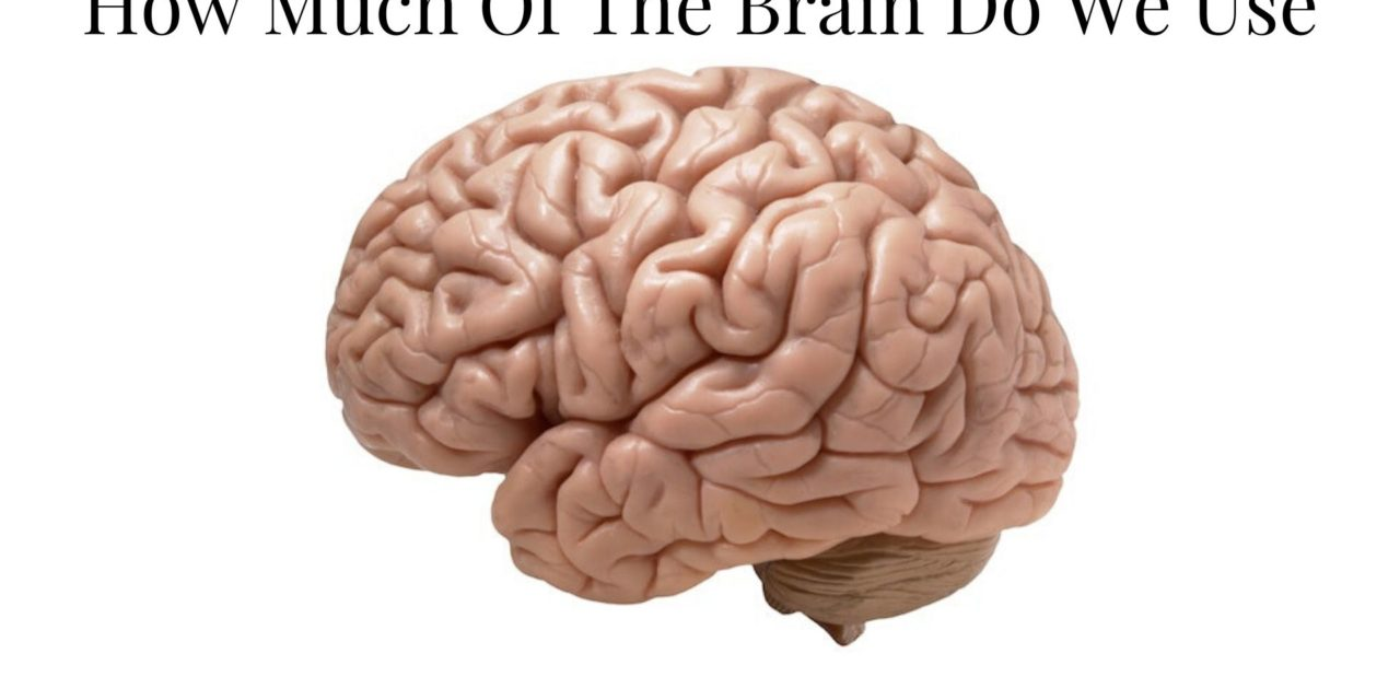 How Much Of The Brain Do We Use – Brain Foods for Brain Health