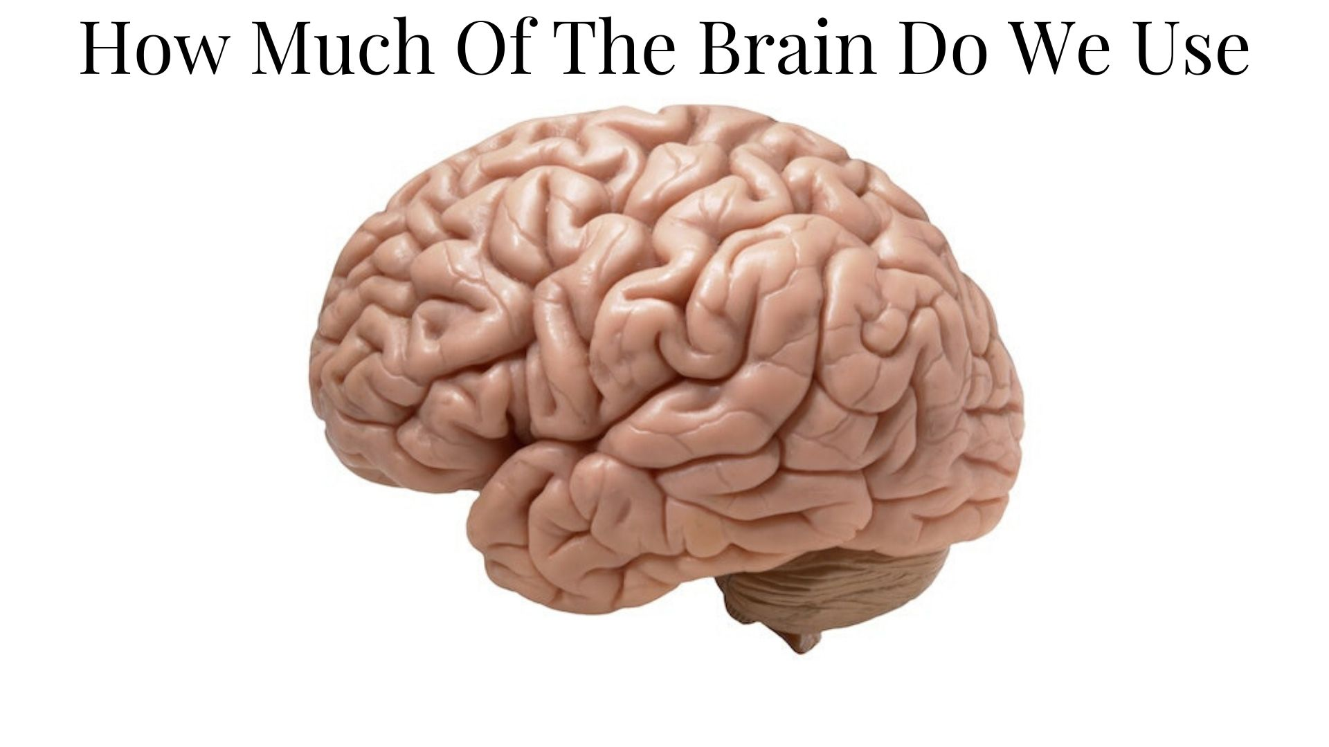 How Much Of The Brain Do We Use