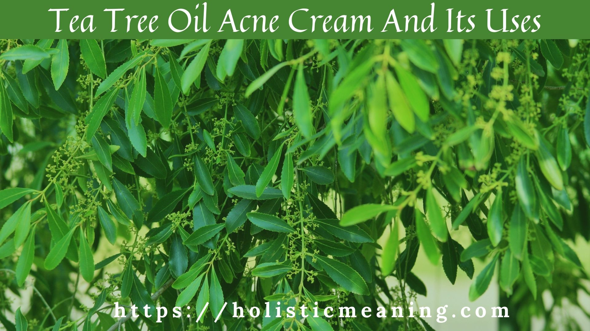 Tea Tree Oil Acne Cream And Its Uses