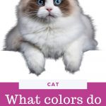 What colors do cats see?